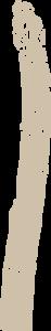 asperge-blanche